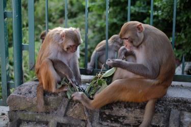 khỉ-2
