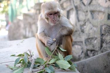 khỉ-3