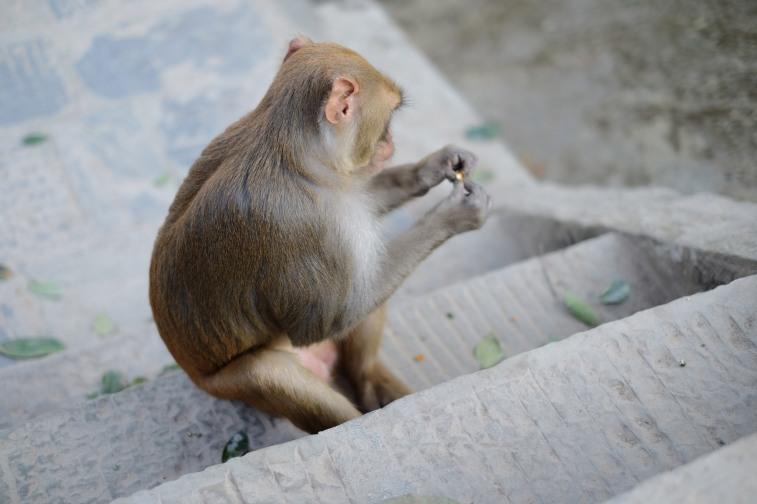khỉ-4